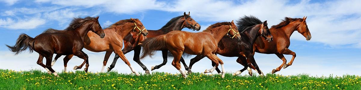 Прогулки на лошадях – лучшая терапия. Советы как улучшить свои навыки в верховой езде